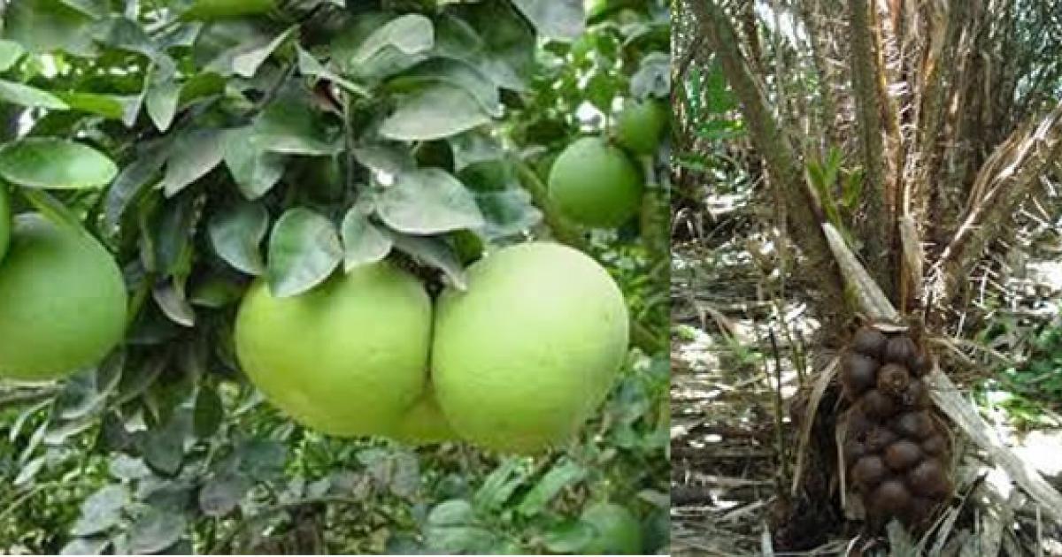 Balinese-fruits-.jpg